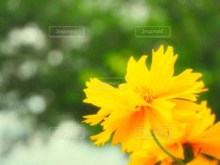 近くの花のアップの写真・画像素材[1273137]