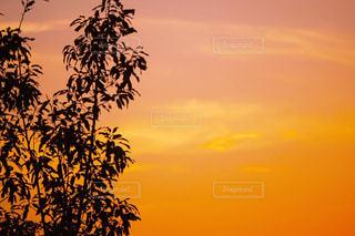 サンセット イエローの写真・画像素材[1505310]