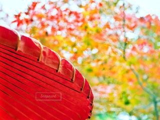 傘と紅葉の写真・画像素材[1684614]