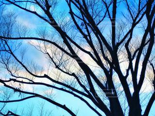 青空と大木の写真・画像素材[1745267]
