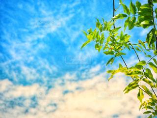 空と葉の写真・画像素材[2288483]