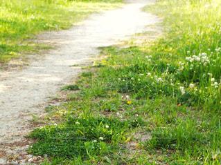 田舎道の写真・画像素材[2302202]