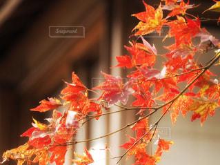 秋楓と風景の写真・画像素材[2318680]
