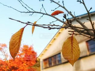 秋を詠むの写真・画像素材[2433479]