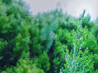 葉の雫一滴の写真・画像素材[2656012]