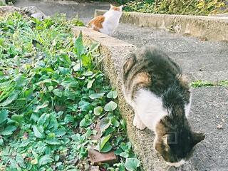 二匹の猫の写真・画像素材[2687514]