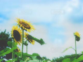 夏休みの写真・画像素材[3182172]