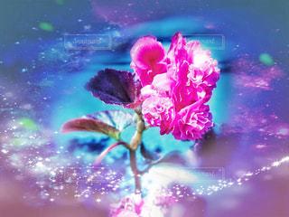 花の背景の写真・画像素材[3201648]