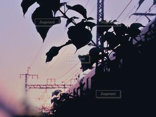 記憶の中の電車の写真・画像素材[3262659]