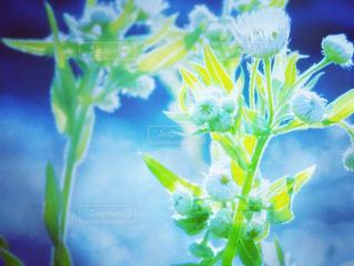 花のクローズアップの写真・画像素材[3282976]