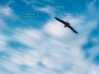 鳶の滑空の写真・画像素材[3498565]