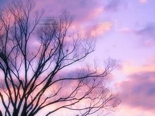 大木の写真・画像素材[3555074]