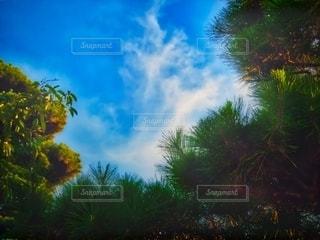 稲妻雲の写真・画像素材[3577992]