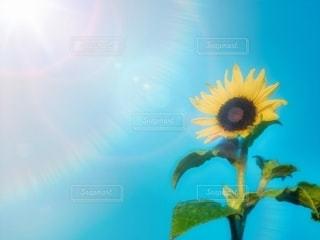 向日葵と太陽の写真・画像素材[3580632]