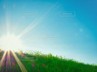朝陽の写真・画像素材[3735209]