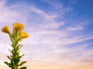 朝焼けに眺めての写真・画像素材[3771609]