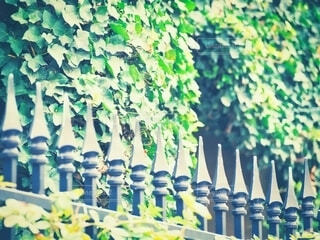 森の洋館の写真・画像素材[3892869]