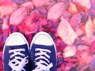紅葉 桜落ち葉の絨毯の写真・画像素材[3921099]