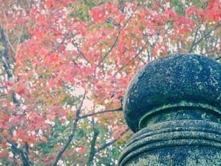 紅葉狩りの写真・画像素材[3924910]