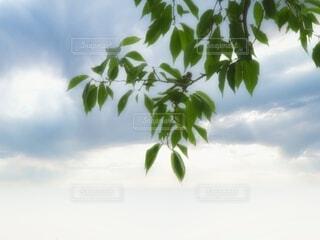 朝靄にすずめのかくれんぼの写真・画像素材[4110086]