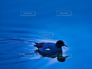 朝の水辺と鴨の写真・画像素材[4202400]