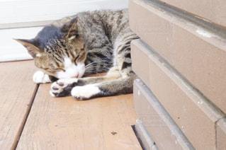 猫の写真・画像素材[1357485]