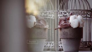 ケージの上に座っている花瓶の写真・画像素材[1256750]