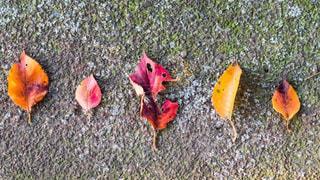オレンジ色の花のグループの写真・画像素材[1427895]