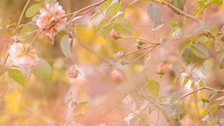 近くの花のアップの写真・画像素材[1623949]