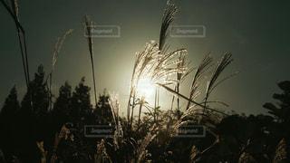 晴れた日にヤシの木のグループの写真・画像素材[1627543]
