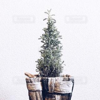 木の花の花瓶の写真・画像素材[1635103]