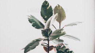植物の花と花瓶の写真・画像素材[1641999]