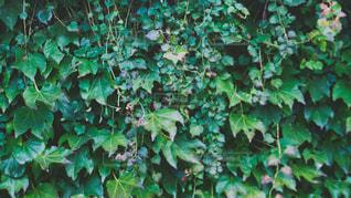 近くの緑豊かな緑の森の写真・画像素材[1666846]