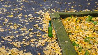 秋の写真・画像素材[1683058]