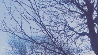 近くの青い曇り空の写真・画像素材[1693628]