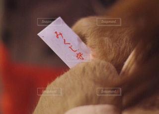 初詣の写真・画像素材[1699743]