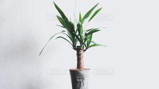 植物の花の花瓶の写真・画像素材[1702608]