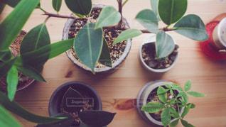 木製のテーブルが緑の植物をトッピングの写真・画像素材[1717863]