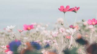 近くの花のアップの写真・画像素材[1857670]