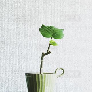 屋内の写真・画像素材[2011124]