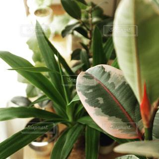 緑の植物のクローズアップの写真・画像素材[2103435]