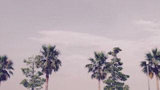 木の横にあるヤシの木のグループの写真・画像素材[2122575]