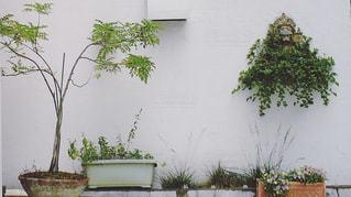 木の上の花の花瓶の写真・画像素材[2122964]