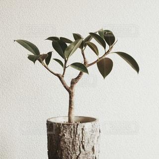 木の表面に座っている花で満たされた花瓶の写真・画像素材[2174732]