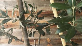 植物の接写の写真・画像素材[2174733]