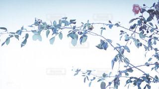 鳥の群れが木の上を飛んでいるの写真・画像素材[2189309]