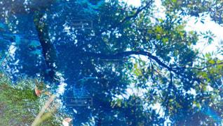 木のクローズアップの写真・画像素材[2190575]