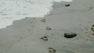 浜辺に立っている鳥の写真・画像素材[2204817]