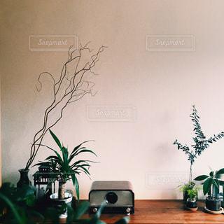 植物の花瓶の写真・画像素材[2309146]