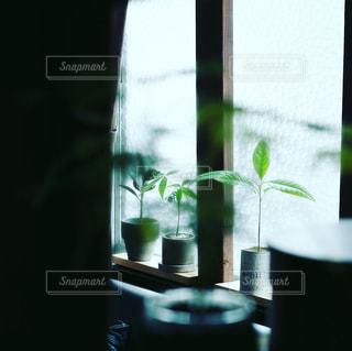 窓の前のガラスの花瓶の写真・画像素材[2309147]